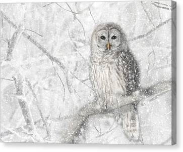 Snowy Barred Owl Canvas Print by Lori Deiter