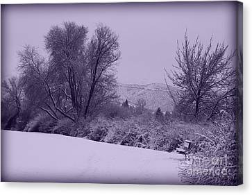 Snowy Bench In Purple Canvas Print by Carol Groenen