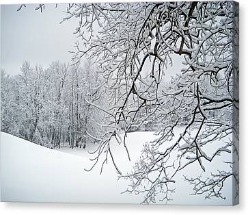 Snowy Branches Canvas Print by Aimee L Maher Photography and Art Visit ALMGallerydotcom