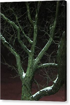 Snowy Branches Canvas Print by Guy Ricketts