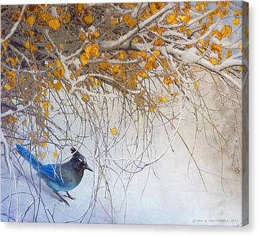 Snowy Branches Stellar Jay Canvas Print by R christopher Vest