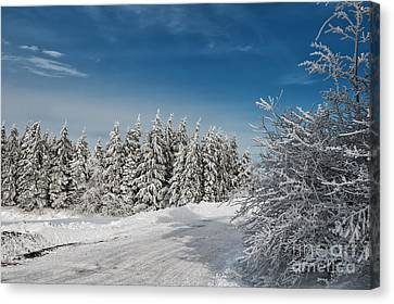 Snowy Country Lane Canvas Print