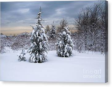 Snowy Dawn Canvas Print by Deborah  Bowie