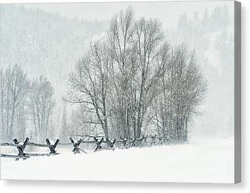 Snowy Day In The Tetons Canvas Print by Sandra Bronstein