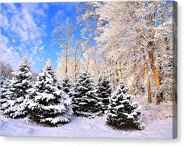 Snowy Dreams Canvas Print by Angel Cher