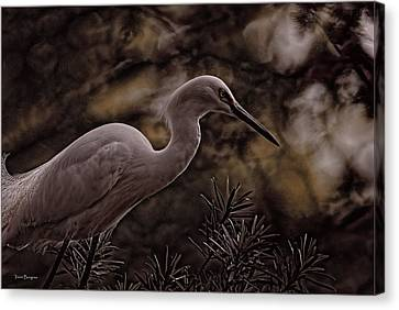 Canvas Print featuring the photograph Snowy Egret 002 by Travis Burgess