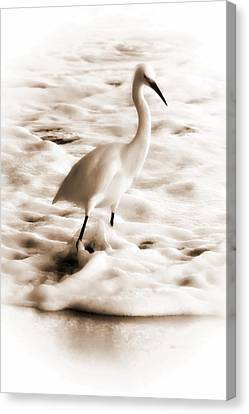 Snowy Egret Canvas Print by Christina Ochsner