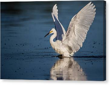 Snowy Egret Frolicking In The Water Canvas Print