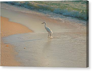 Snowy Egret In Surf II Canvas Print by Steven Ainsworth
