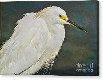 Snowy Egret Portrait Canvas Print by Deborah Benoit