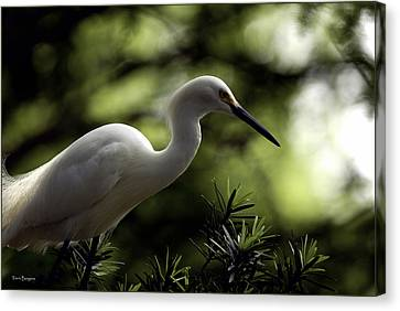 Canvas Print featuring the photograph Snowy Egret by Travis Burgess