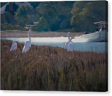 Snowy Egrets Icw Canvas Print by Christopher Reid