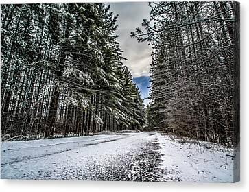 Snowy Forest Lane Canvas Print