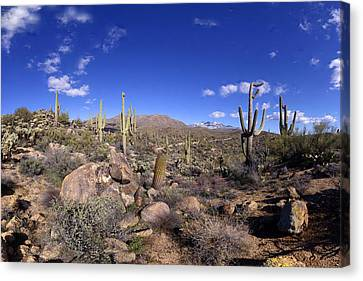 Snowy Four Peaks Panorama February 12 2013 Canvas Print
