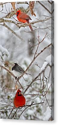 Snowy Grace Cardinals Canvas Print