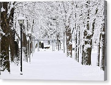 Snowy Lane In Winter Park Canvas Print by Elena Elisseeva