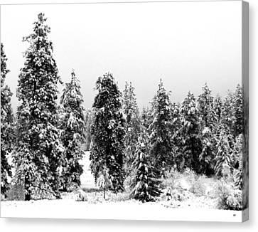 Morn Canvas Print - Snowy Morn by Will Borden
