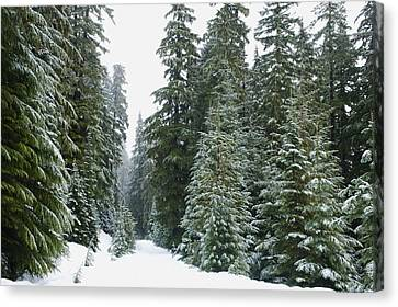Snowy Mount Hood Forest Canvas Print by Charmian Vistaunet