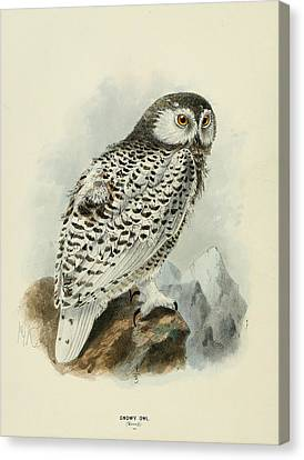 Snowy Owl 1 Canvas Print by Dreyer Wildlife Print Collections