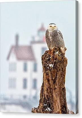 Snowy Owl At The Lighthouse Canvas Print
