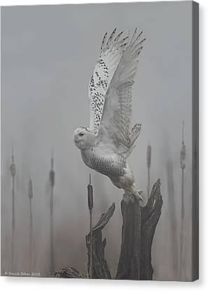 Snowy Owl Blastoff Canvas Print