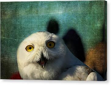 Snowy Owl Canvas Print by Denyse Duhaime