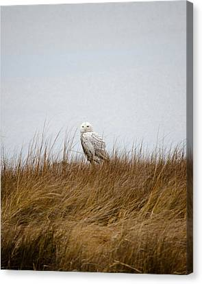 Snowy Owl Canvas Print by Gary Wightman
