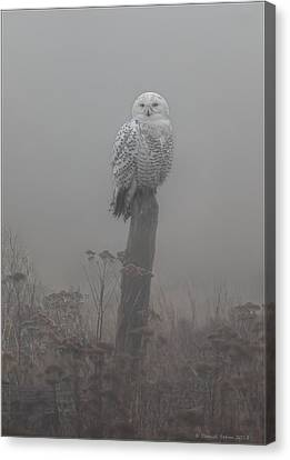 Snowy Owl  In The Mist Canvas Print