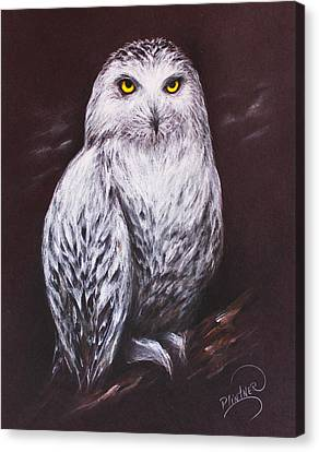 Snowy Owl In The Night Canvas Print