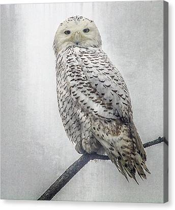 Canvas Print featuring the photograph Snowy Owl In The Rain by Constantine Gregory
