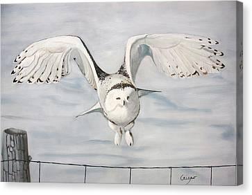Snowy Owl Canvas Print by Jean Yves Crispo