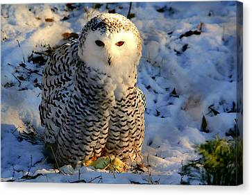 Snowy Owl Canvas Print by Larry Trupp