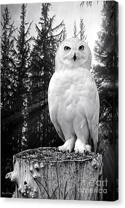 Canvas Print featuring the photograph Snowy  by Adam Olsen