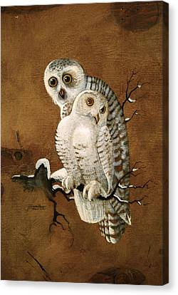 Snowy Owls Canvas Print by Richard Hinger