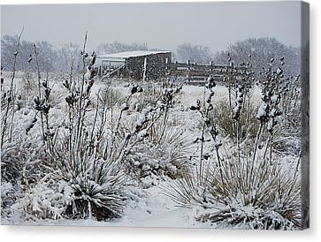 Snowy Pasture Canvas Print by Melany Sarafis