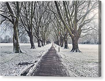 Snowy Path Through Jesus Green In Cambridge Uk Canvas Print by Justin Paget