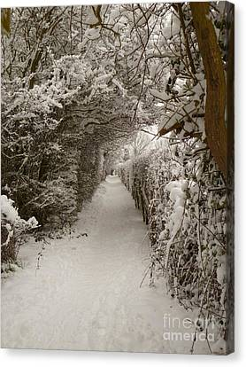 Canvas Print featuring the photograph Snowy Path by Vicki Spindler