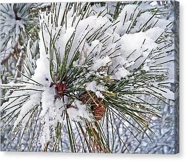 Snowy Pine Canvas Print by Aimee L Maher Photography and Art Visit ALMGallerydotcom