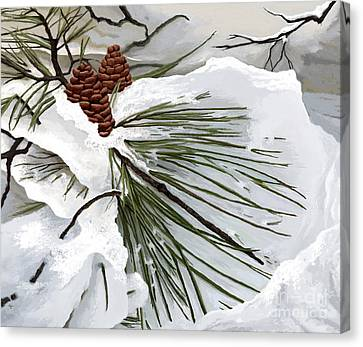 Snowy Pine  Canvas Print by Jackie Case