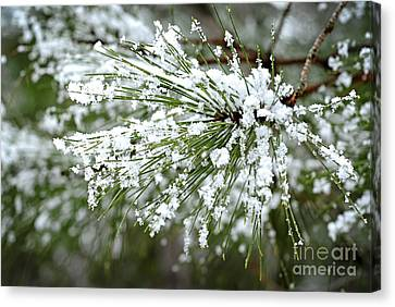 Frosty Canvas Print - Snowy Pine Needles by Elena Elisseeva