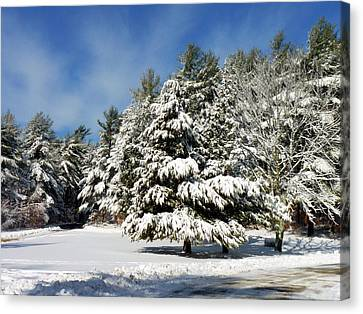 Canvas Print featuring the photograph Snowy Pines by Janice Drew