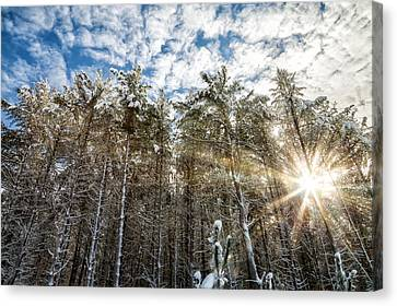 Snowy Pines With Sunflair Canvas Print by Brian Boudreau