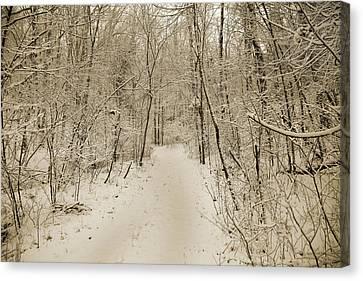 Snowy Sepia Canvas Print by Betsy Knapp