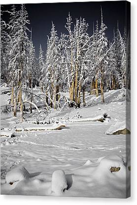 Snowy Silence Canvas Print by Chris Brannen