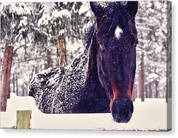 Snowy Spirit Canvas Print by Teri Virbickis