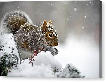 Snowy Squirrel Canvas Print by Christina Rollo