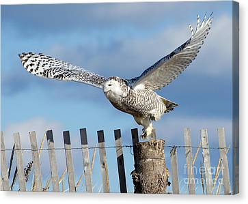 Snowy Takeoff Canvas Print by Stephen Flint