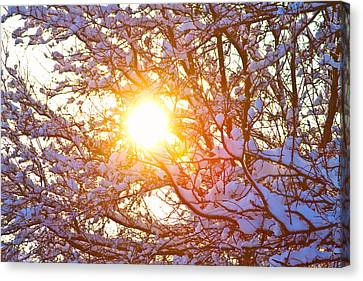 Snowy Tree Branches And Sunshine Canvas Print