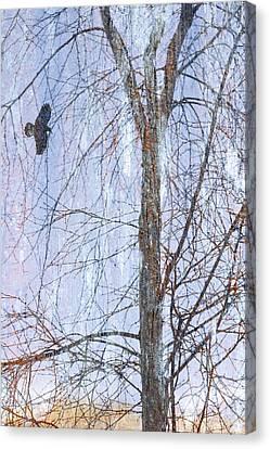 Snowy Tree Canvas Print by Carol Leigh