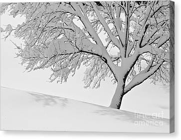 Canvas Print featuring the photograph Snowy Tree by Jay Nodianos